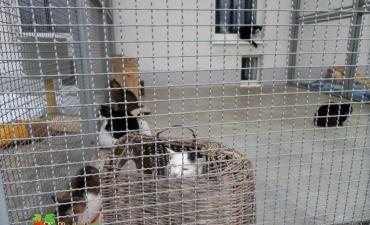 2014_04_Wyjazd do schroniska dla bezdomnych zwierząt