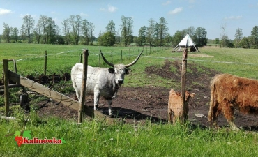 2016_06_ Wycieczka na ranczo